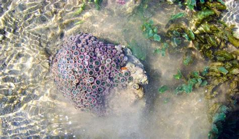 pirotan island jamnagar tourism   reach  time