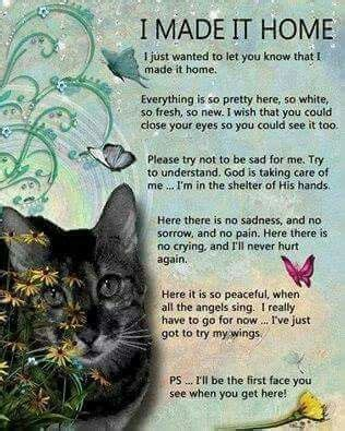 Comforting Words For Of A Pet by 1000 Pet Loss Quotes On Pet Loss And