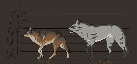 wolf size compared to dire wolf size compared to human