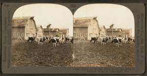 Keystone Barns File Group Of Modern Dairy Barns And Herd Of Holstein