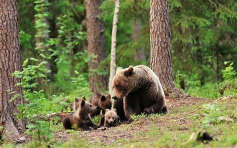 imagenes animales que viven en el bosque animales del bosque cu 225 les son caracter 237 sticas y h 225 bitat