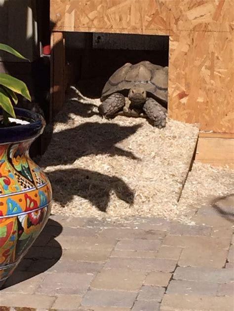 sulcata tortoise house sulcata tortoise house turtles tortoises pinterest