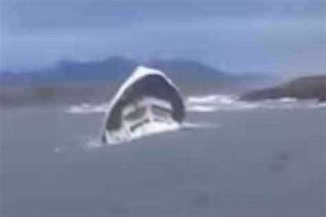 fishing boat accident tofino vancouver whale watching tragedy fishermen first on scene
