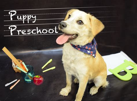 puppy preschool puppy pre school humane society of broward countyhumane society of broward county