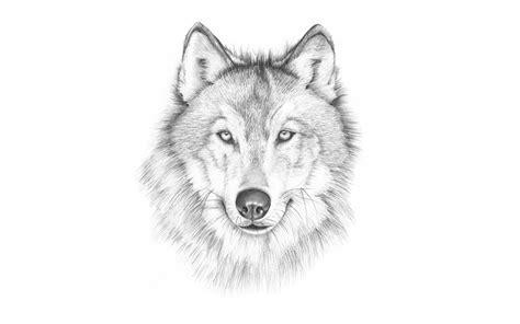 lobo haircut fotos wolf kopf tiere gezeichnet