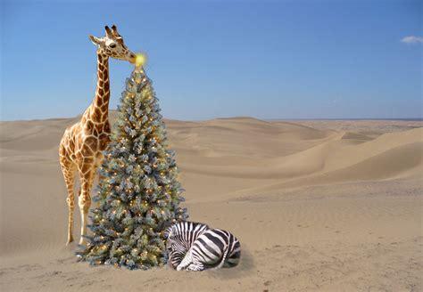 safari christmas by ybpopular on deviantart