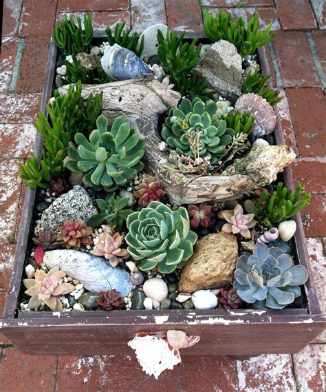 Succulent Rock Garden Ciao Newport A Visit With Camille And Pots