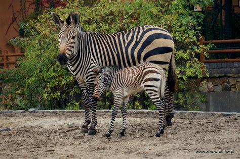zoologischer garten breslau zoo wroclaw zoo adopcja