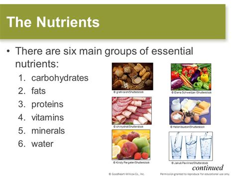 6 proteins and their functions food nutrients and their functions food ideas