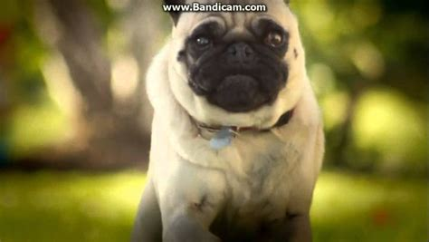 doritos commercial pug 301 moved permanently