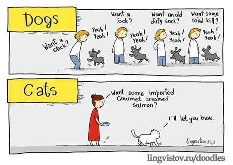 how to get dogs and cats to get along should you get a cat or a the cornish