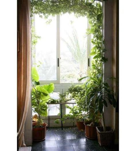 beautiful wall climbing plants indoor ideas