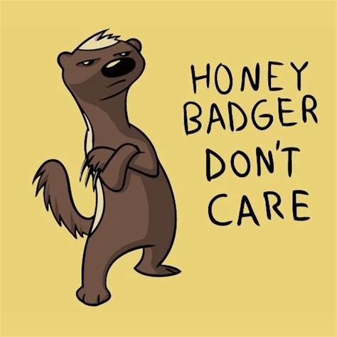 Honey Badger Don T Care Meme - best 25 honey badger meme ideas on pinterest honey