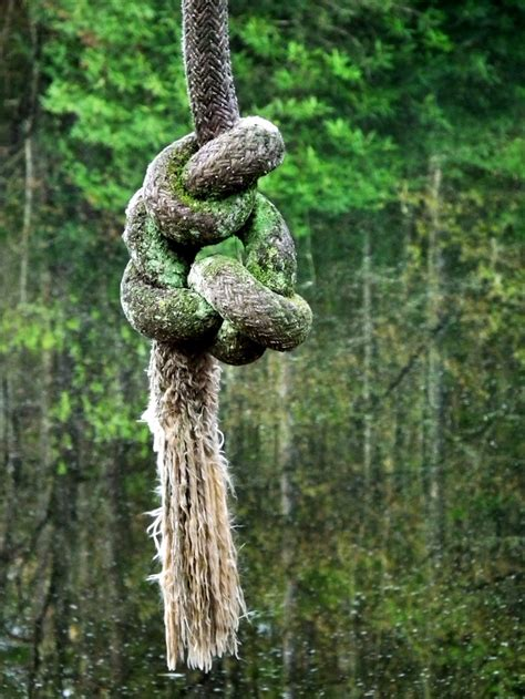 knot for rope swing rope swing tie the knot pinterest