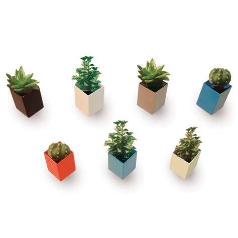 mini plants mini plant pots