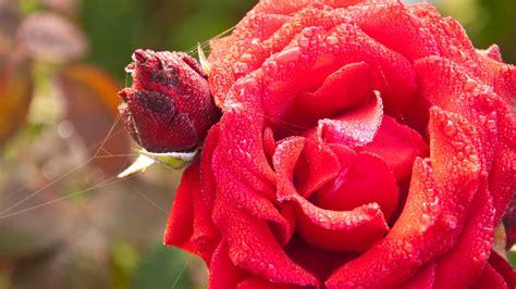 Garten Pflanzen Jahreszeit by Pflanzen Der Herbst Ist Die Beste Jahreszeit