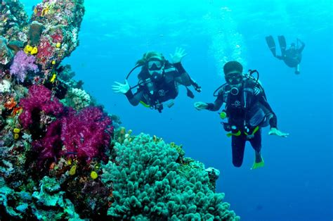 dive fiji fiji the world traveling guide