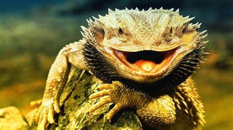 fotos animales reptiles nature wallpaper animales reptiles darkgray