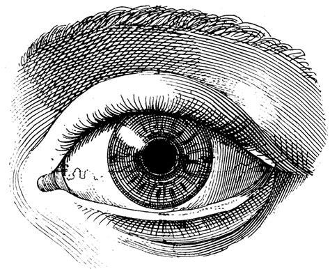 diagram sketch eye anatomy drawing human anatomy diagram
