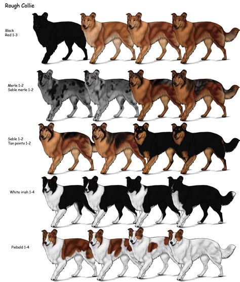 german shepherd color chart category breeds herding farms wikia