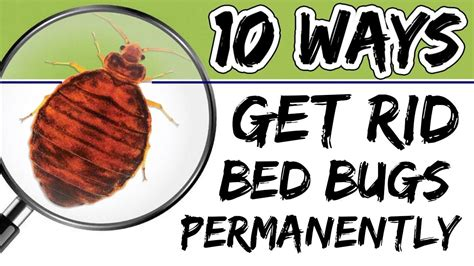 How To Get Rid Of Bed Bugs In A by How To Get Rid Of Bed Bugs Permanently With 10 Most
