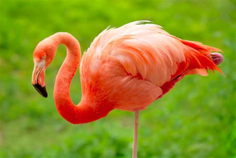 Eagle Flamingo Grey Orange a list of national birds of all countries with stunning