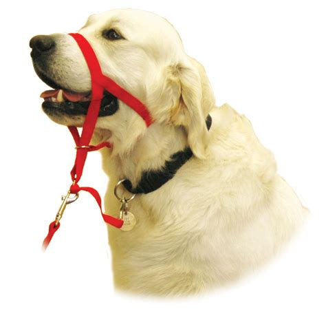 how are dogs for company of animals halti headcollar