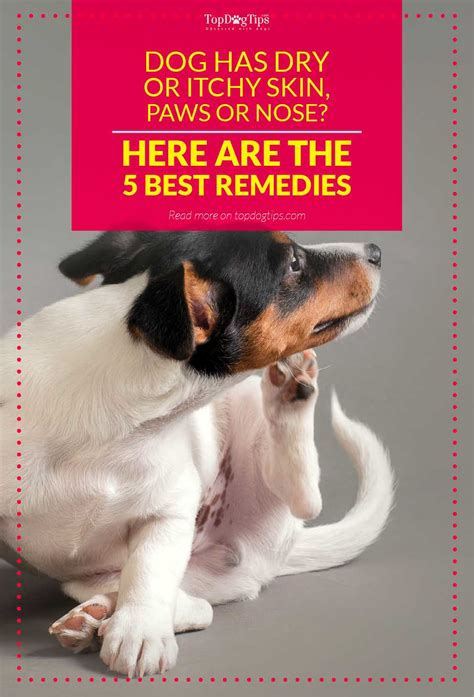 relief for dogs top 5 best remedies for s skin paws nose or itchiness