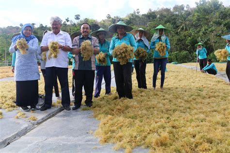 Tata Niaga Hasil Perikanan 1 benahi tata niaga niaga kkp optimalkan potensi produksi rumput laut sumba timur maritimnews