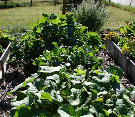 How To Start An Organic Vegetable Garden How To Start Gardening Growing Organic Vegetables How