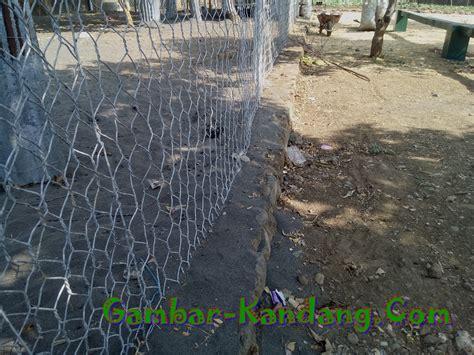 Kawat Ram Kandang Ayam Contoh Kawat Untuk Pagar Umbaran Ternak Hewan Peliharaan Kumpulan Gambar Kandang Ternak Terlengkap