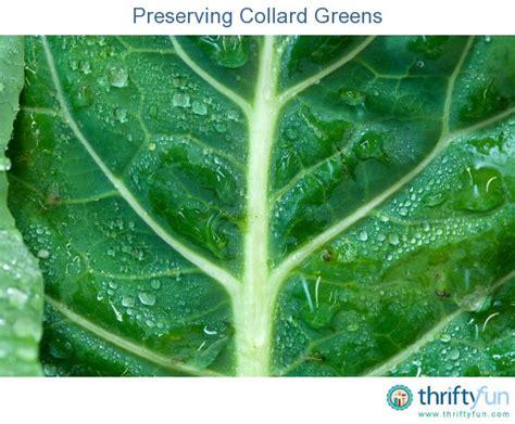 preserving collard greens thriftyfun