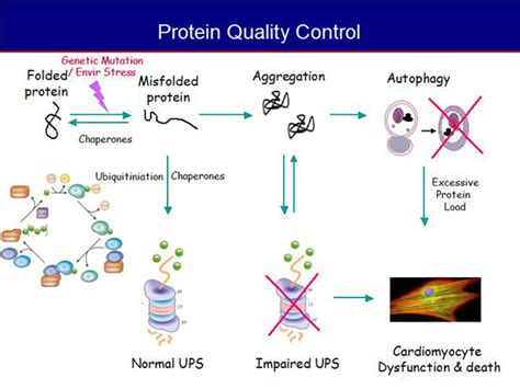 protein quality japanese circulation society