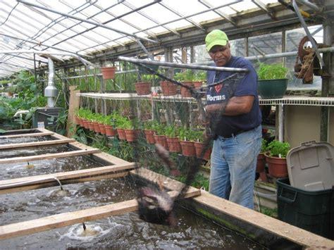 file samuel allen farm buildings chappaqua ny jpg growing power grows fish veggies and community with