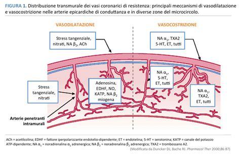 vasi coronarici vasospasmo coronarico