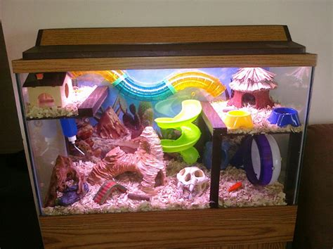 Hamster Berikut Kandang evobig inilah kandang ideal untuk hamster