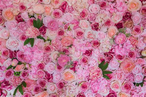 wallpaper flower wall the flower wall sydney sydney s premium flower wall hire