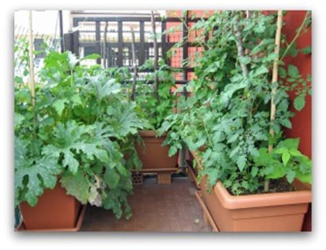 plastic garden boxes for vegetables easy exles of container gardens