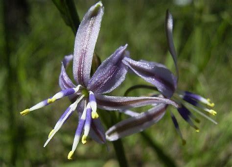 imagenes extrañas y curiosas foro de infojardn plantas y flores curiosas