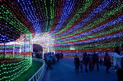ditmas oark christmaslight displat 16 places that will make you fall in with