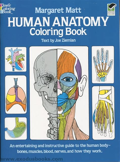 human anatomy coloring book dk human anatomy coloring book exodus books