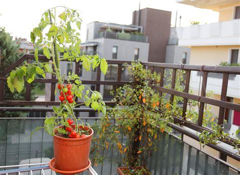obst balkon saarbr 252 cken vortrag 252 ber obst und gem 252 se f 252 r balkon und
