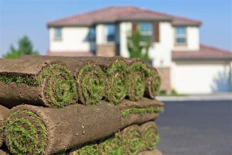 is the cost of sod worth the instant grassy lawn realtor com 174