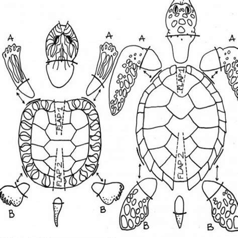 como hacer volados al caparazon de una tortuga a crochet como hacer una tortuga de cart 243 n 5 pasos uncomo