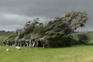 extreme antarctic winds shape trees into beautiful forms