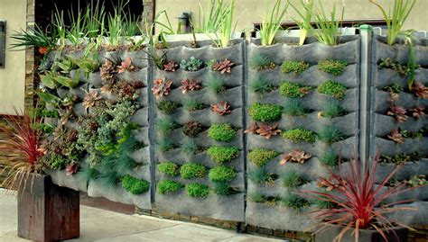 vertical vegetable garden kits plants on walls vertical garden systems raphael on ventura