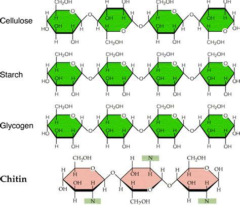 diagram of a polysaccharide polysaccharides html 05 polysaccharides gif