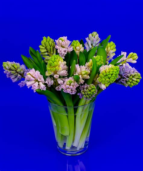 Flowers Delivered With Vase by Hyacinth Vase Same Day Delivery Danvers Ma