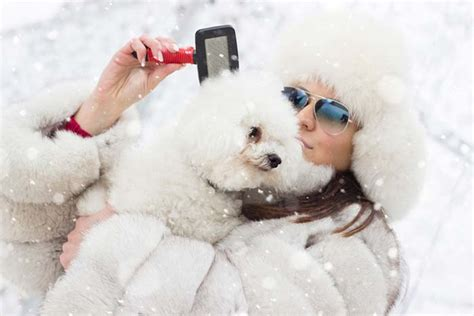 excessive in puppies 5 ways to reduce excessive shedding in winter couture country