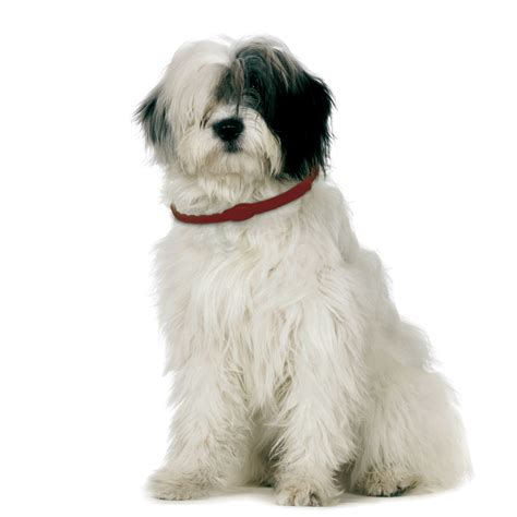 best flea collar for puppies how to get rid of fleas on dogs forever the ultimate guide